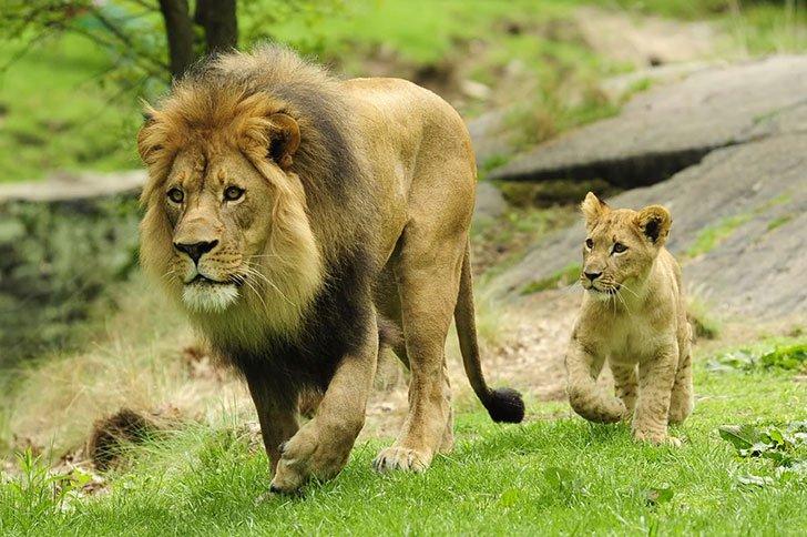 30 photos showcasing human parenting and animal parenting moments 15