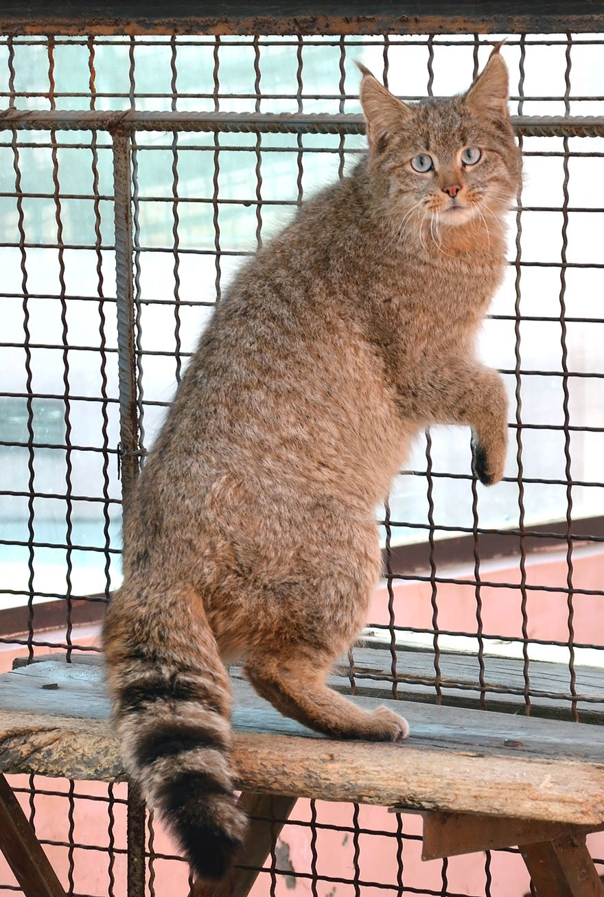 unusual wild cats 22 880