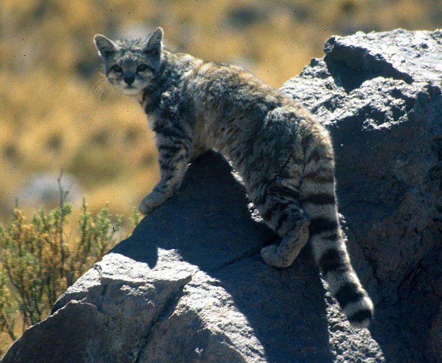 unusual wild cats 231 880