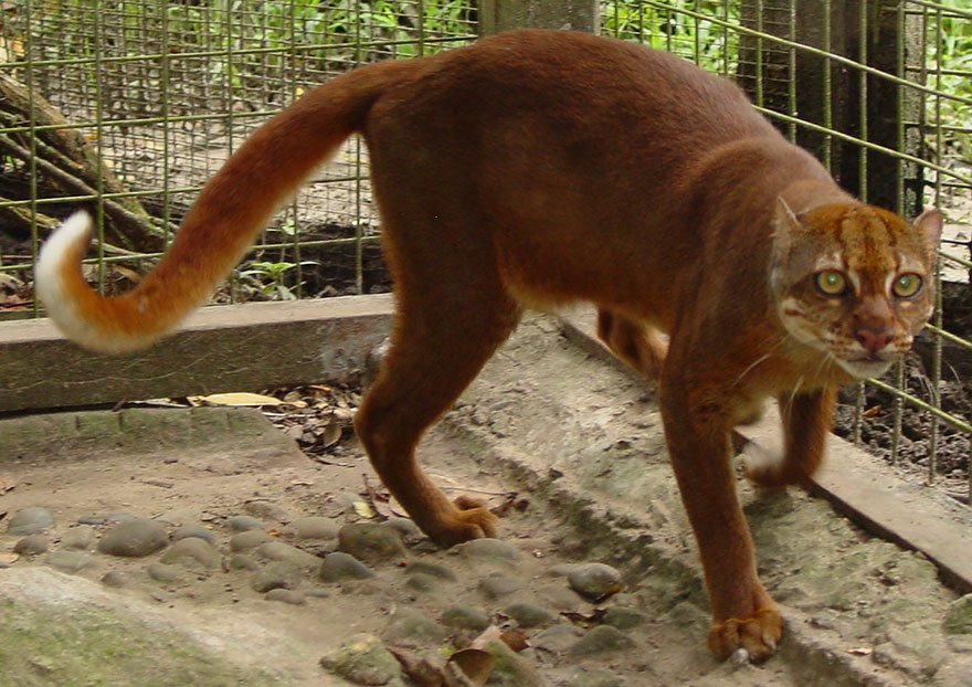 unusual wild cats 23 880