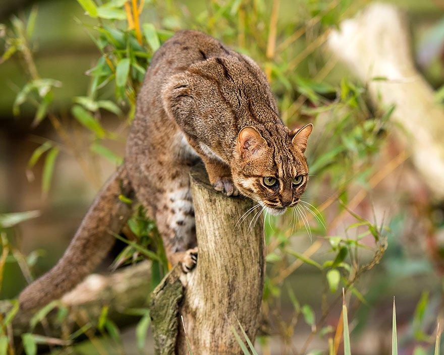 unusual wild cats 28 880