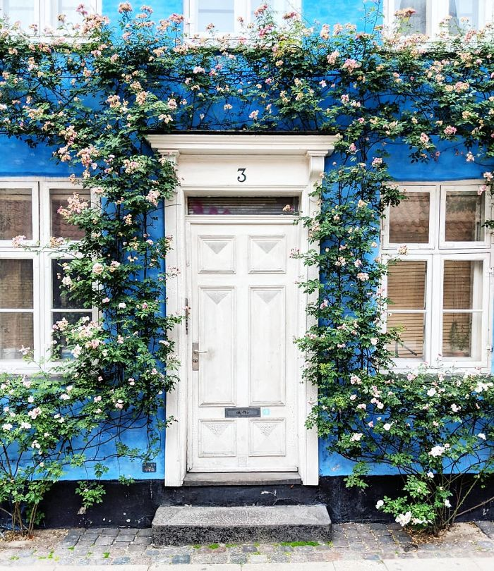 colorful front doors photography london bella foxwell 52 5c36fa45f3fa1 700