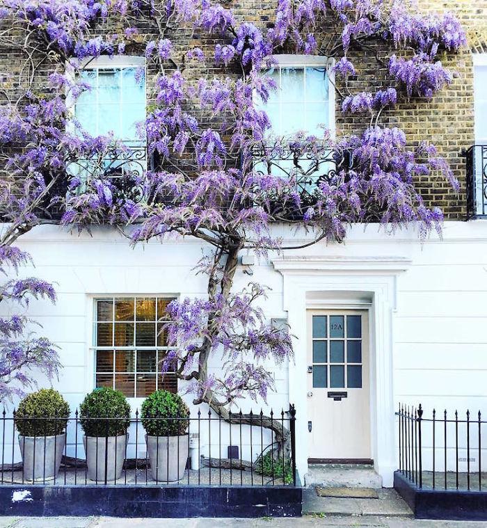 colorful front doors photography london bella foxwell 68 5c36fa66e482e 700