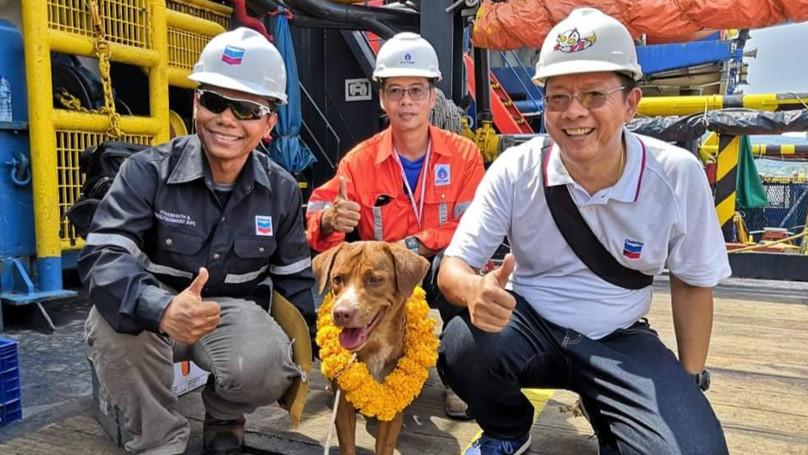 lost bird chu cho boi 220km den gian khoan thai lan 1
