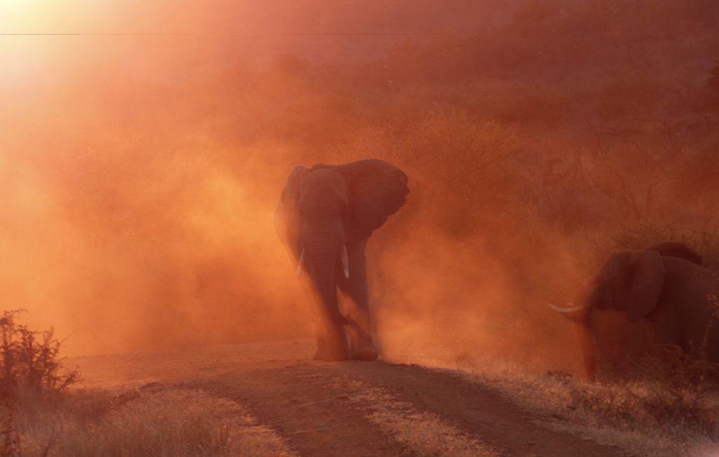 Khi thấy một chiếc xe đến gần, mẹ voi tỏ vẻ không thích và hất bụi bay lên mịt mù xung quanh bà ấy. Ảnh: Greg Davison.