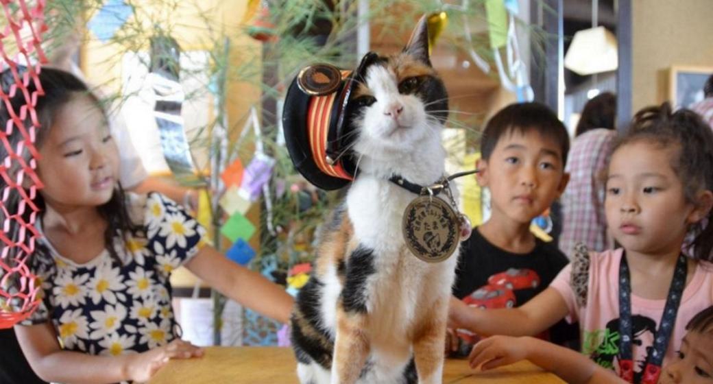 Mèo đóng vai trò quan trọng trong đời sống tín ngưỡng tâm linh của người Nhật Bản.