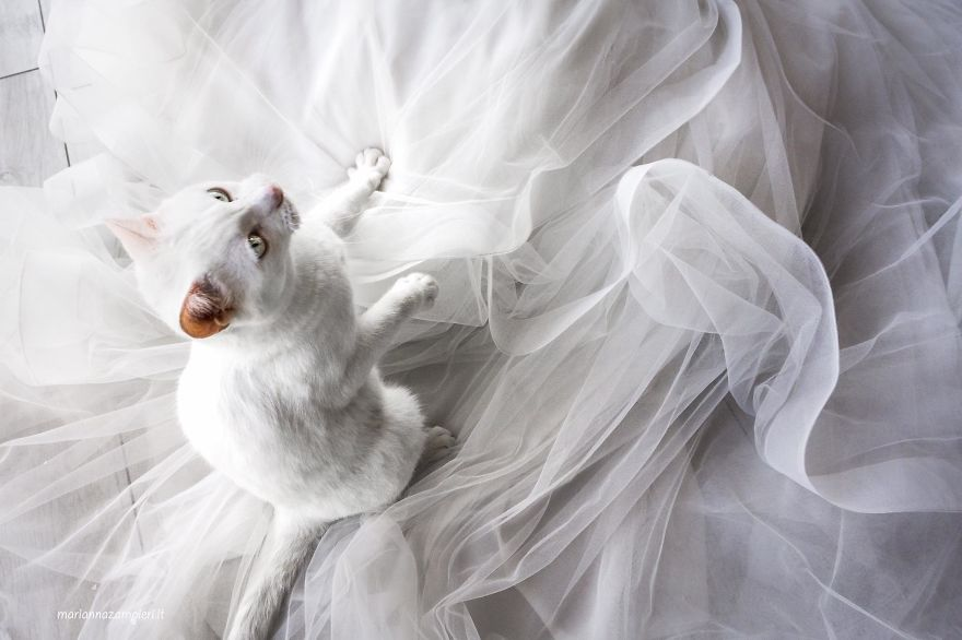 i do post marriage private shooting with cats 5a4deb72ac48a 880