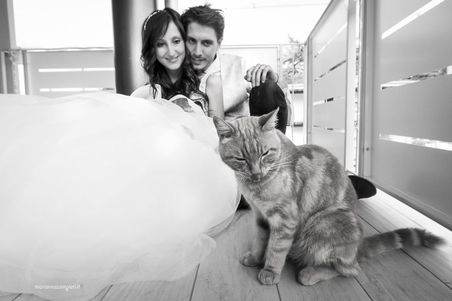 i do post marriage private shooting with cats 5a4deb758ec70 880