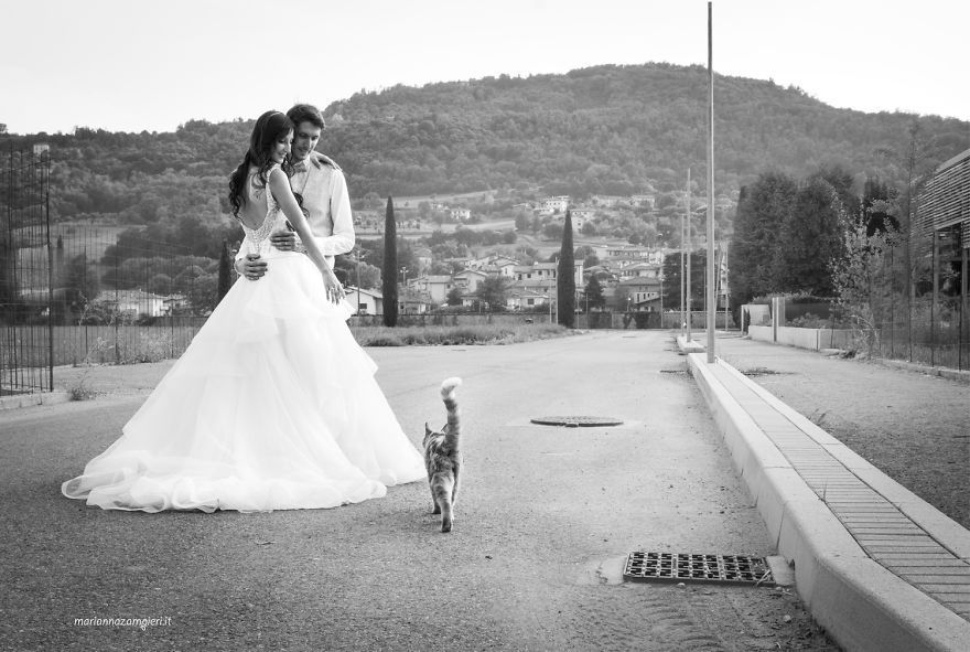 i do post marriage private shooting with cats 5a4deb8f4dd3f 880