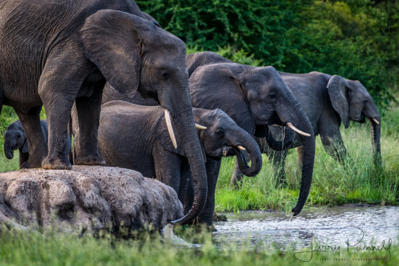 elephant water hole 1 190