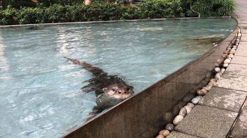 Đi 'phượt' ngầu như rái cá: Dừng chân ngâm mình ngay đài phun nước ở trung tâm thương mại Singapore
