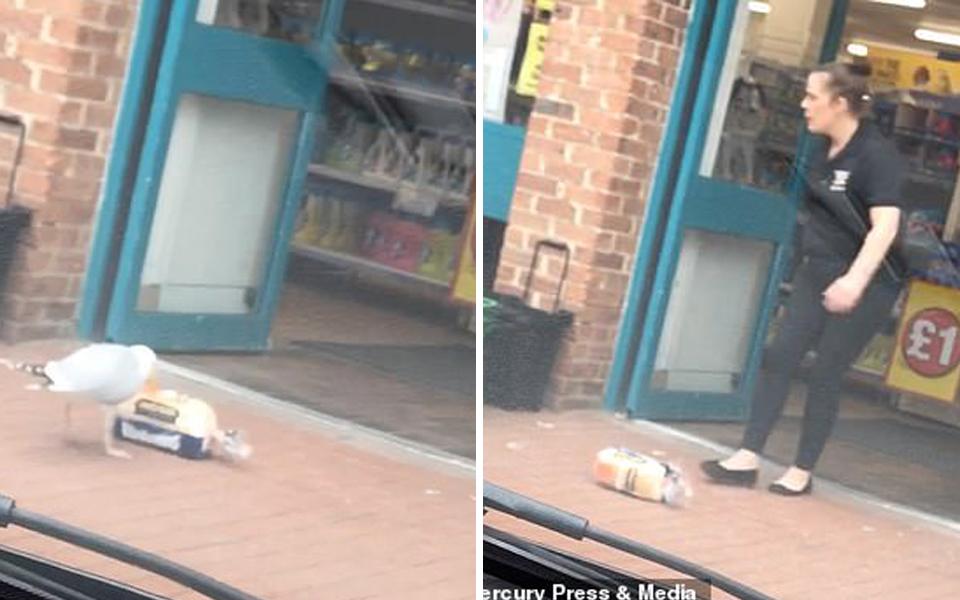 Không có tiền, mòng biển vẫn tự tin vào siêu thị trộm bánh mì