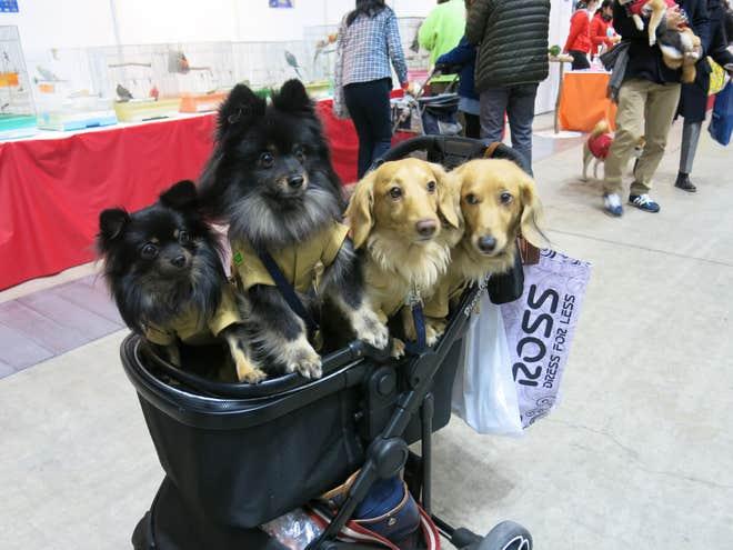 dog japan fair