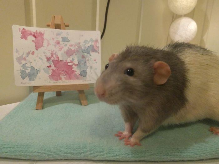 trained pet rat darius paintings amalie markota andersen norway 1 6 5d89ff00e19fb 700