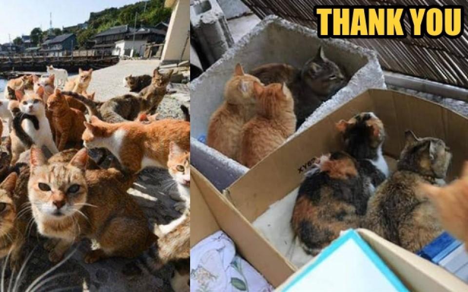 Hình ảnh ấm lòng sau thảm hoạ Hagibis: Những chú mèo hoang ở đảo Okishima vẫn an toàn