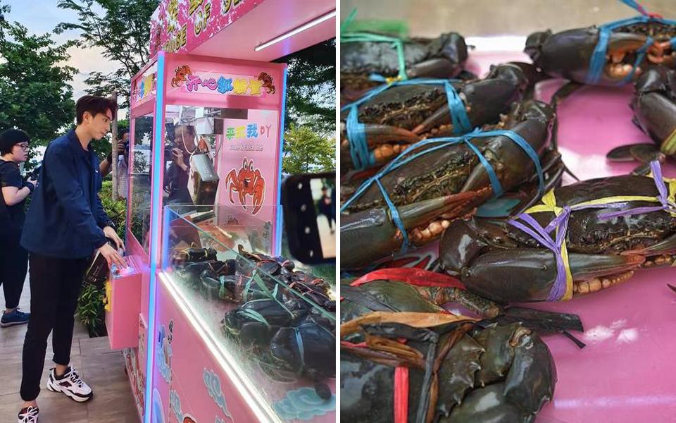 Máy gắp cua giải trí tại Singapore bị các nhóm quyền động vật phản đối kịch liệt