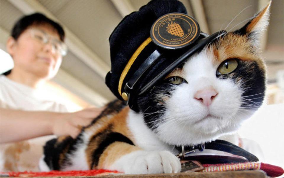 Mèo tam thể được xem là anh hùng vì mang lại vận may cho nhà ga ở Nhật Bản