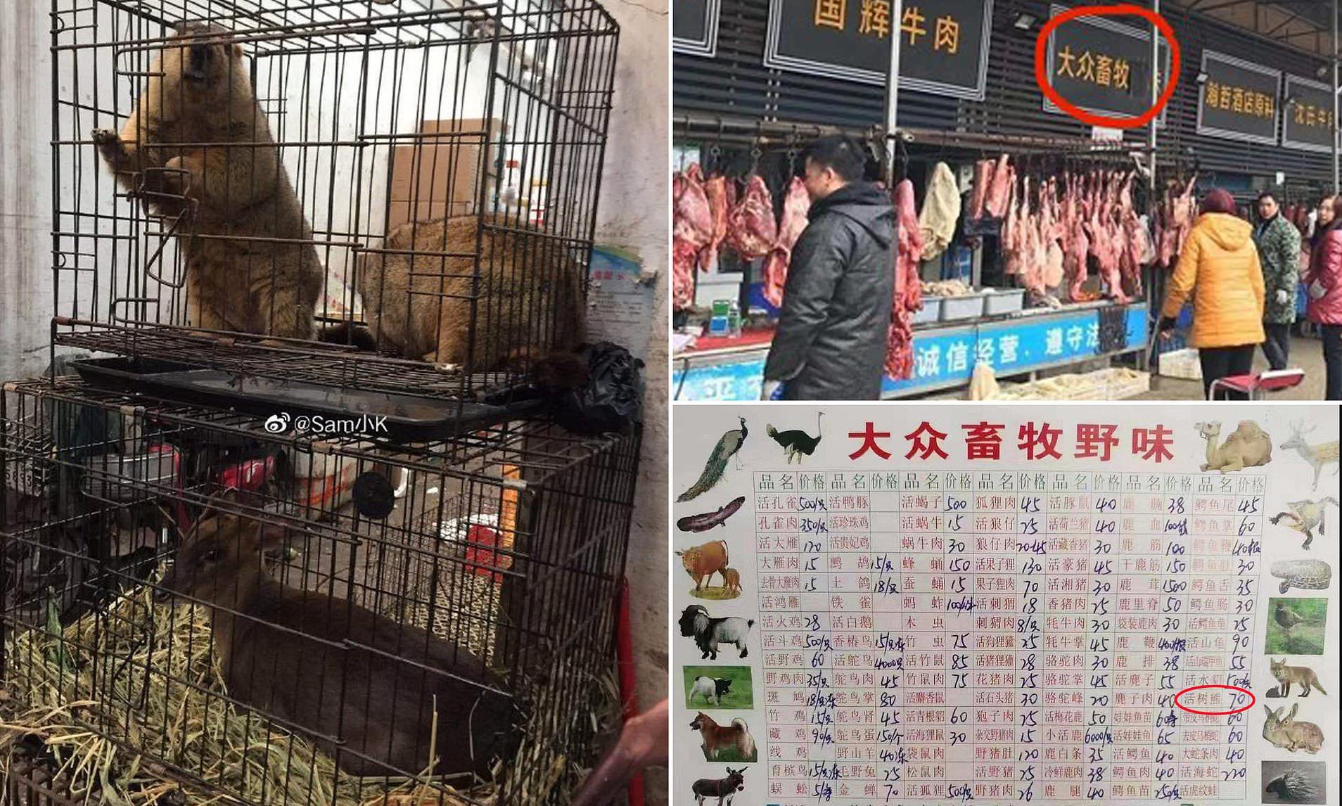 Chợ thực phẩm hoang dã Trung Quốc chính là tâm điểm gây ra bùng phát virus: Koala, dơi, rắn, chuột đều được bày bán