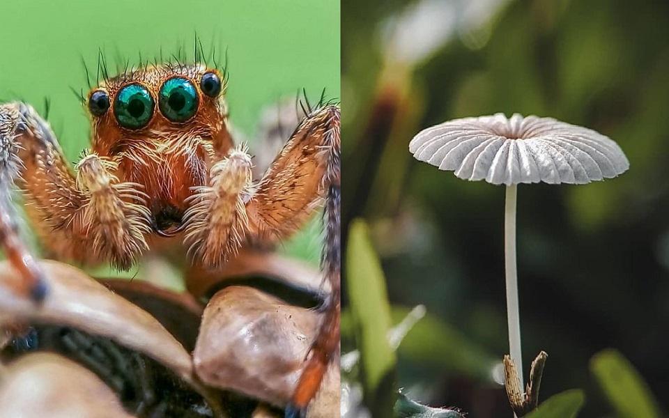 Bạn đã bao giờ ngắm nhìn thế giới côn trùng đẹp, độc, lạ dưới ống kính macro như thế này?