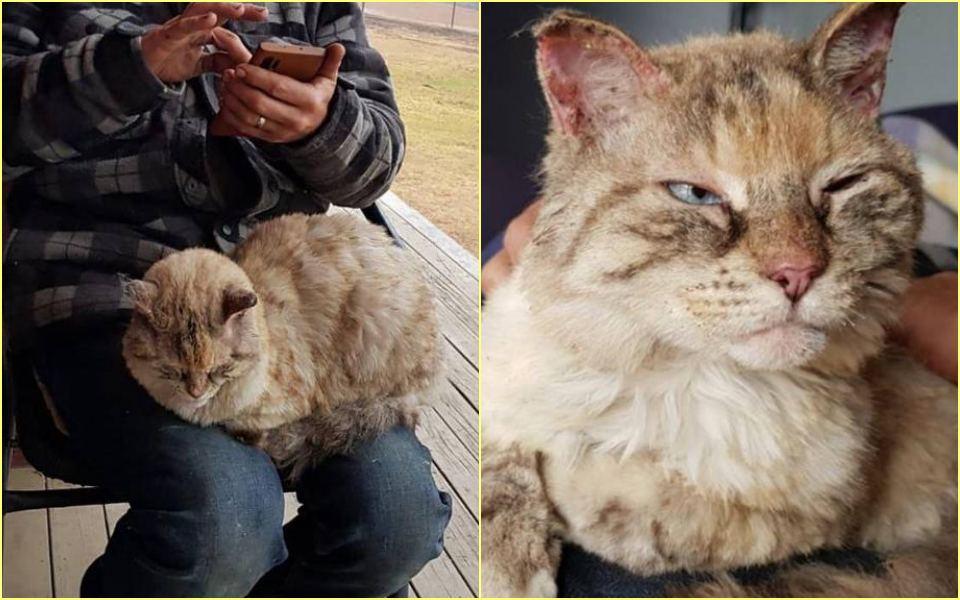 Tin ấm lòng giữa thảm họa cháy rừng tại Úc: Chú mèo trở về với vòng tay người chủ sau nhiều ngày mất tích trong đám cháy