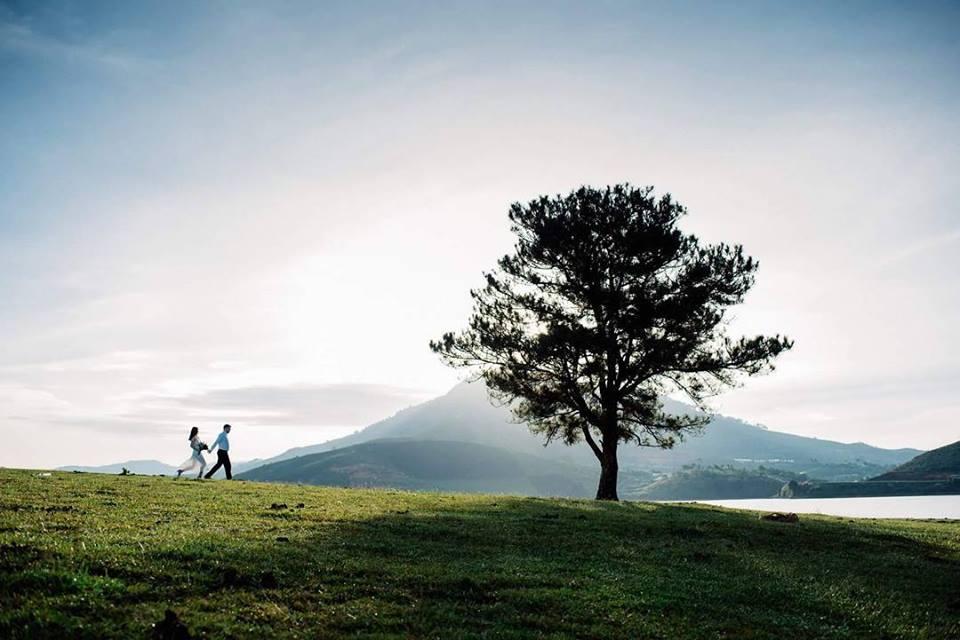 Bên cạnh cây cô đơn trong 'Mắt Biếc', đây là những cây khác cũng được các bạn trẻ check in rần rần