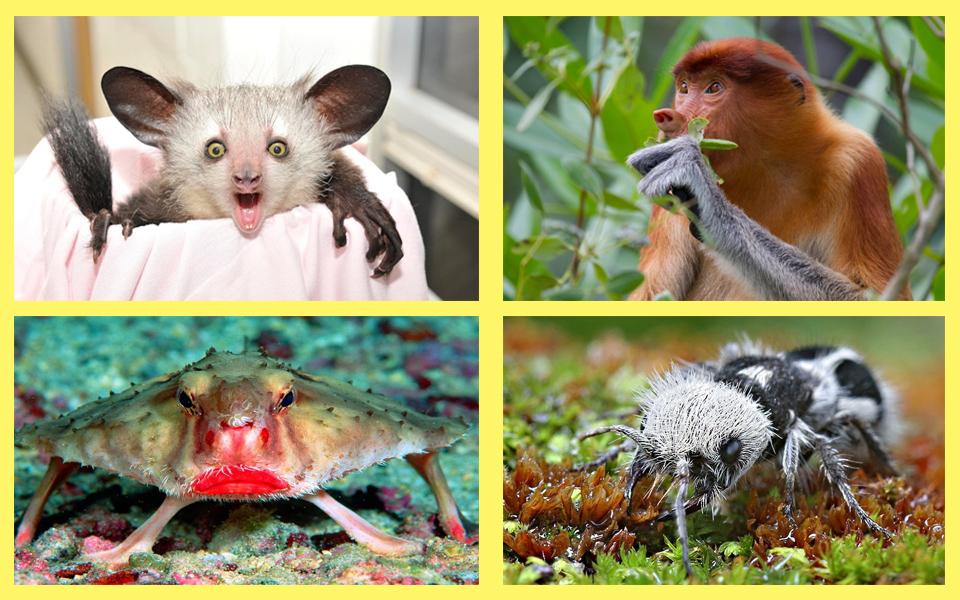 Tuyển tập những loài vật quý hiếm với ngoại hình kỳ dị khiến người nhìn khiếp hãi