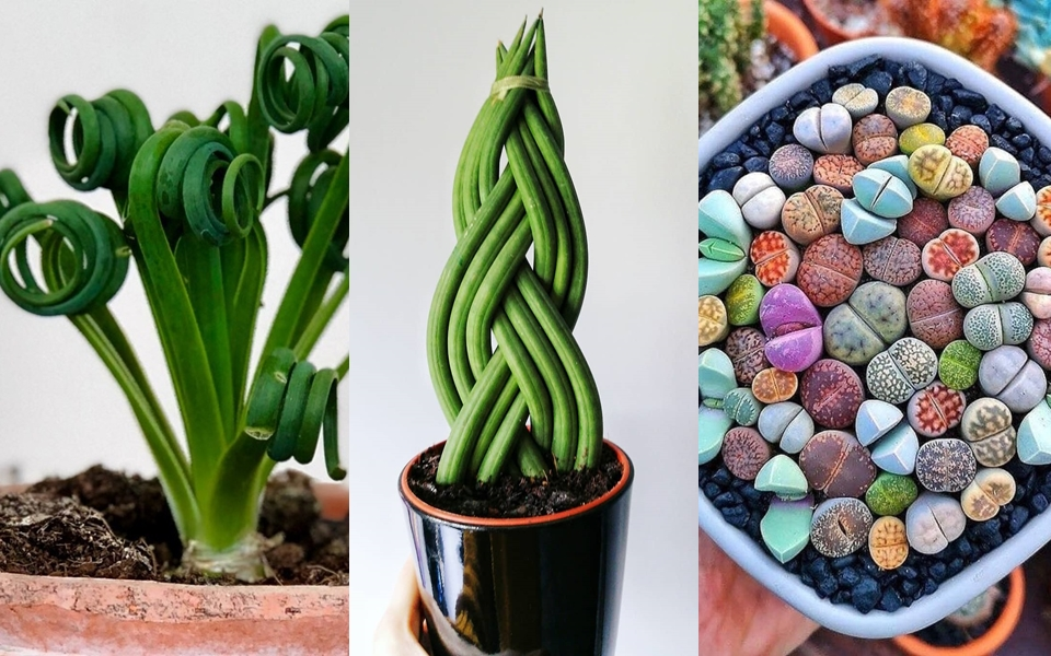 Loạt cây trồng có vẻ ngoài kì lạ giúp không gian nhà bạn trở nên độc đáo