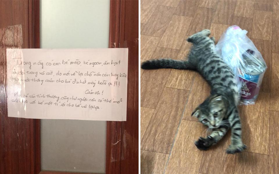 Cháo hành miễn phí (Kỳ 27): Câu chuyện hooman lần đầu chăm mèo và những hoang mang vô cùng đáng yêu
