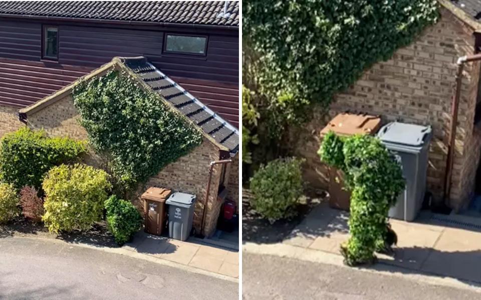 Hàng xóm cải trang thành... bụi cây để trốn cách ly xã hội