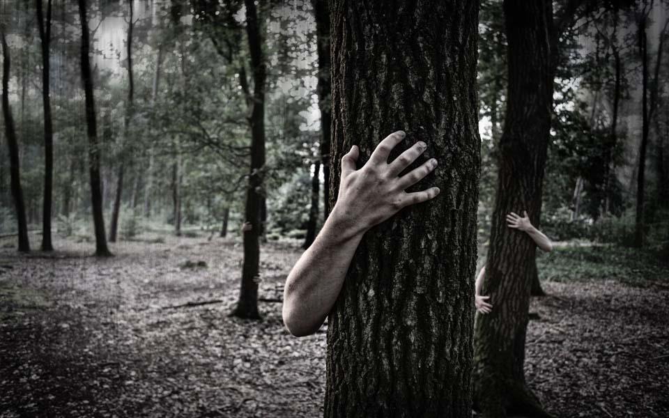 Sự thật đầy ám ảnh về Aokigahara - Khu rừng tự sát ở Nhật Bản