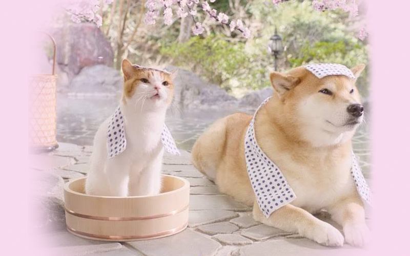 Tan chảy với loạt 'ảnh nóng' của cặp đôi mèo và chó tại suối nước nóng Nhật Bản