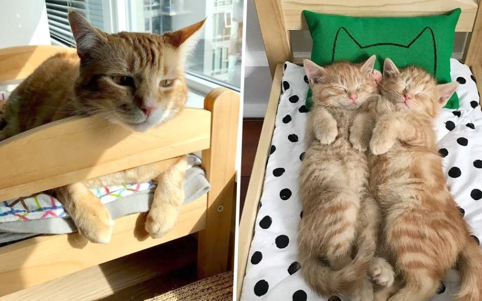 IKEA làm giường cho búp bê, hội yêu mèo 'nảy số' cực nhanh với ý tưởng không thể đáng yêu hơn