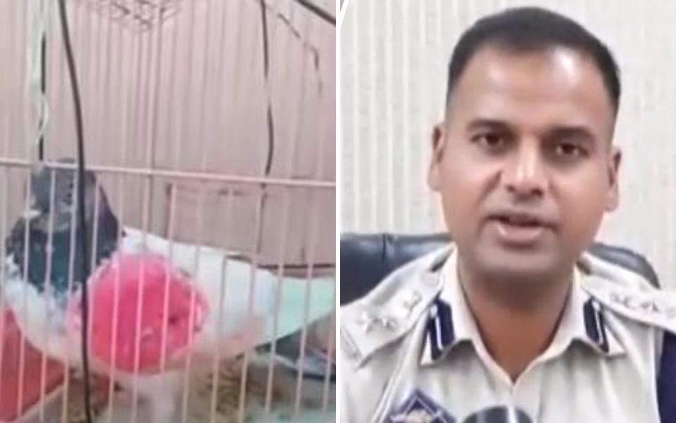 Chú bồ câu bị Ấn Độ bắt giữ vì dính nghi án làm... gián điệp cho Pakistan