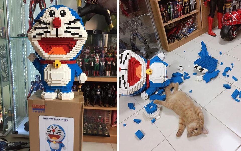 Bộ lego lắp một tuần mới xong bị mèo cưng phá nhưng vẻ mặt 'boss' mới là đáng ghét nhất