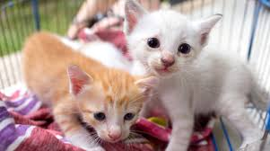The Kitten Crisis! – AM 880 KIXI