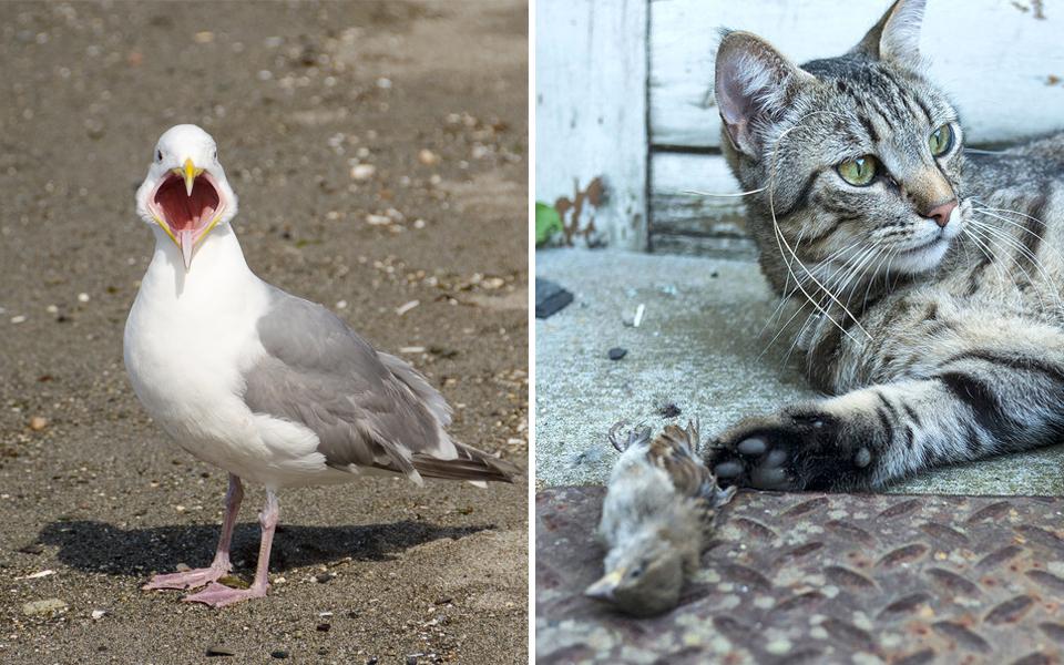 10 thánh cục súc của thế giới động vật: Nhan sắc cute nhưng nội tâm lại rất xấu tính, 'giang hồ'