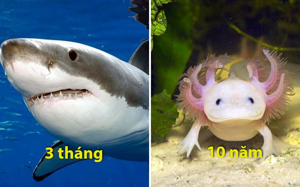 BXH tài nhịn đói của động vật: Cá mập nhịn được 3 tháng, nhà vô địch là loài 30 năm chẳng cần ăn gì