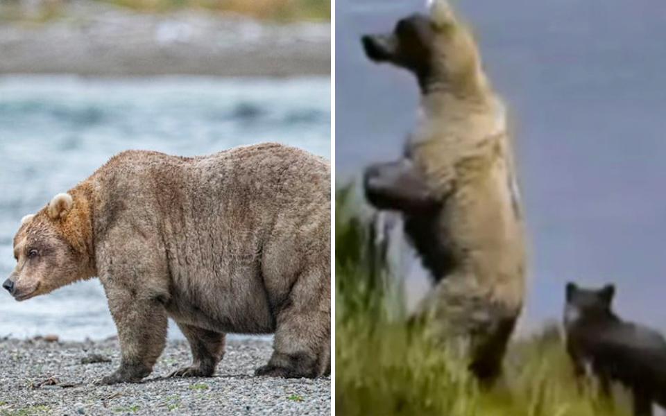 Nhà vô địch hạng mục Gấu Béo năm 2019 đã trở lại với màn giảm cân ngoạn mục