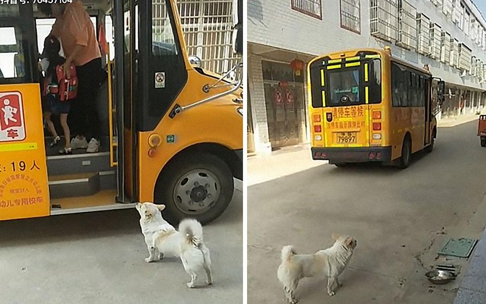 Clip chú chó trung thành đưa đón cô chủ nhỏ đi học mỗi ngày, xem cưng muốn xỉu
