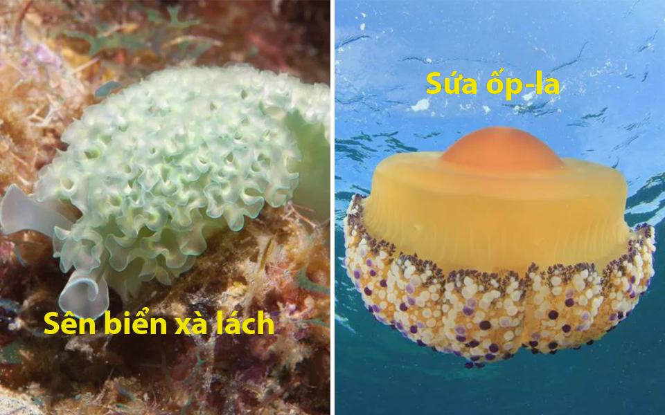 Những sinh vật biển có tên buồn cười vì được đặt khi các nhà khoa học đói bụng 'nhìn gà hóa cuốc'