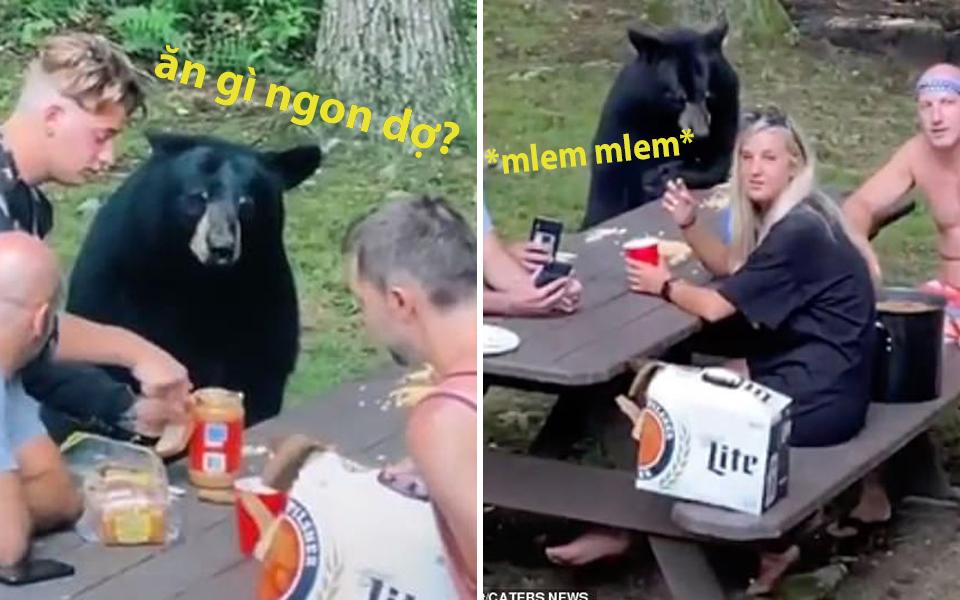 Cả nhà đang đi dã ngoại thì gặp chú gấu đen mon men đến xin bơ đậu phộng
