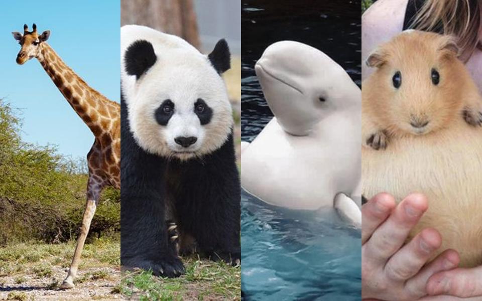 Thời gian thụ thai của 16 loài động vật: Ai là người mẹ vàng trong làng mang thai?