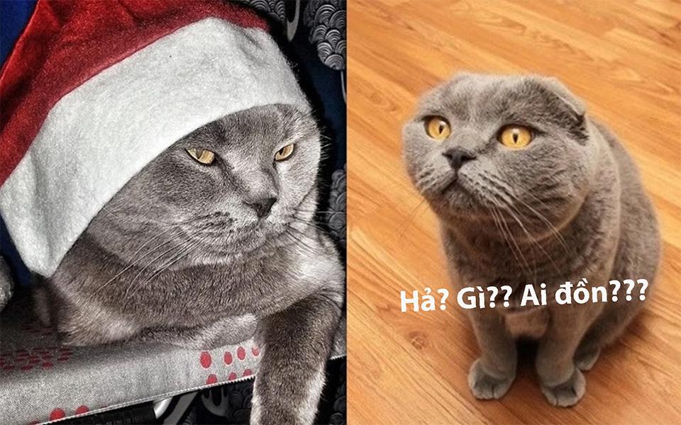 Chú mèo có siêu năng lực biến điều ước thành sự thật được chủ rao bán giá 3 tỷ đồng