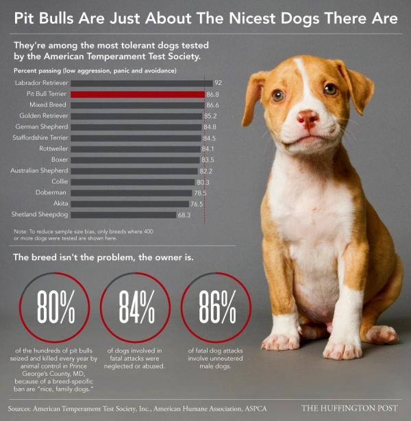 11 8 13 pit bull myths