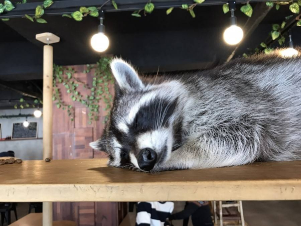 animal cafe 4