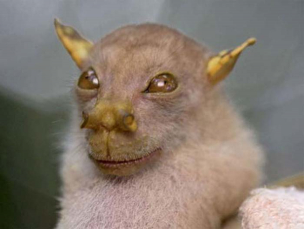 scariest animals in the world 11