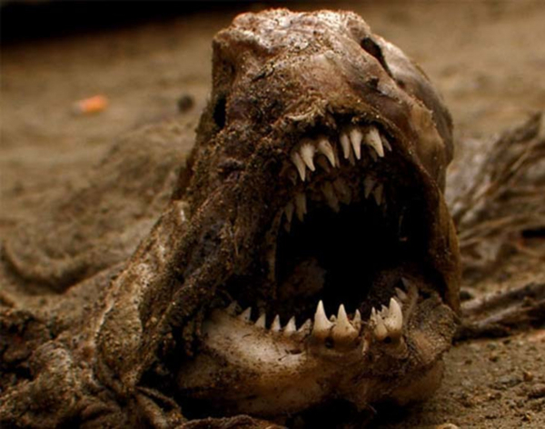 scariest animals in the world 20