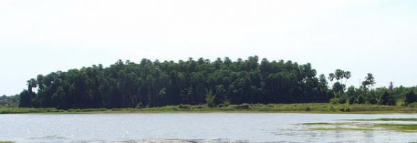 kamchanod forest