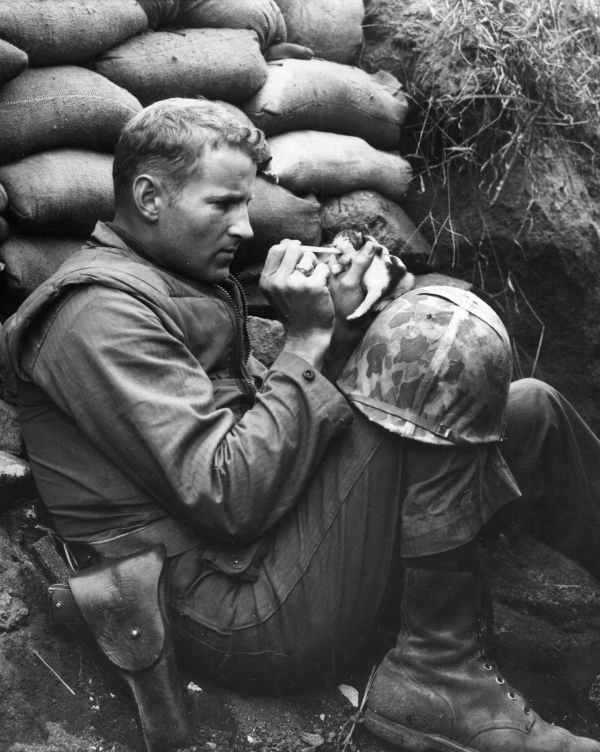 marine feeds an orphan kitten found after a heavy mortar barrage near picture id2658663 size1280