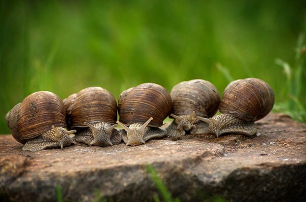 snail 610x404